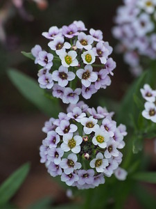 20170910_1555_4216 flowers