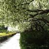 Conservatory Gardens, Central Park