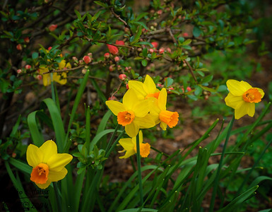Spring Flowers - 2004
