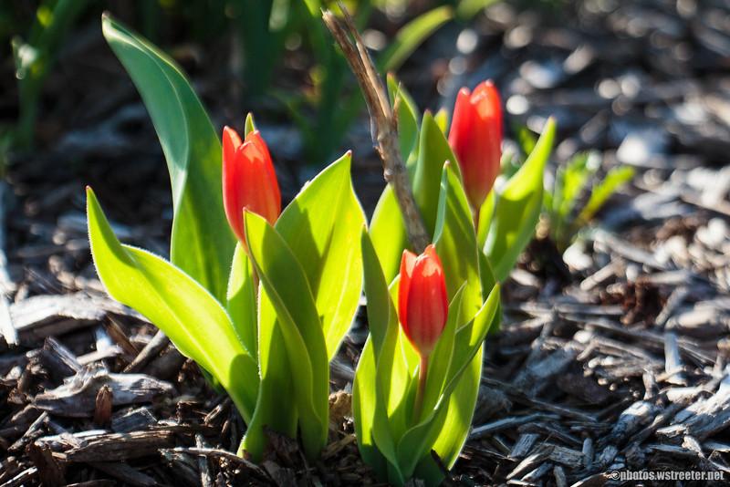 Shanklin Flowers
