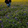Myra takes a closer look at the flowers near Brenham, TX