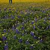 Myra in a field of yellow flowers rimmed with bluebonnets, near Brenham, TX