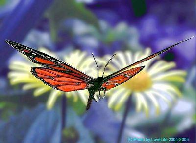 buterfly sculpture