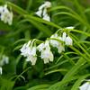 White flower bells