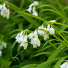 White flower bells