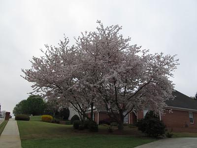 Spring in Lilburn