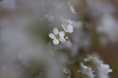 """""""In the spring, the carpet flowered amid the green, and as wind blew, it looked like music on the ground.""""  ~Timothy Egan"""