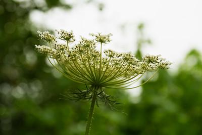 Flower bokeh!