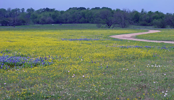Springtime in Texas