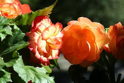 Steve & Evelyn's Flowers