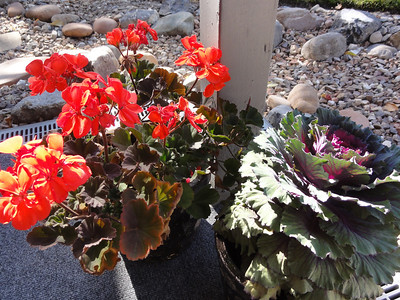 Summer 2013 - Flowers