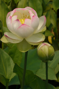 20131228_1220_5427 lotus