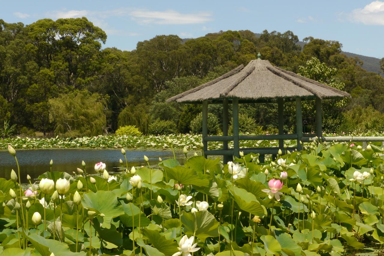 20131228_1346_5532 Blue Lotus Watergardens