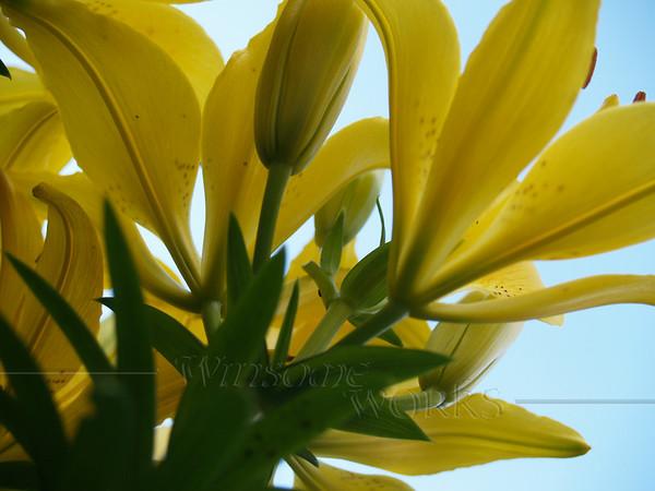 Ornamental Lily