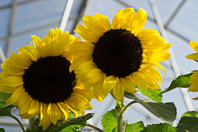 Summer Flowers_2014