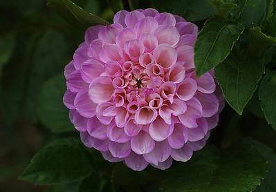 Yuka's Flowers Vol 4
