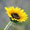 Flower 035c