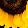 Flower051c