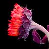 Flower071a