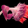 Flower071d