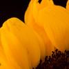 Flower051e
