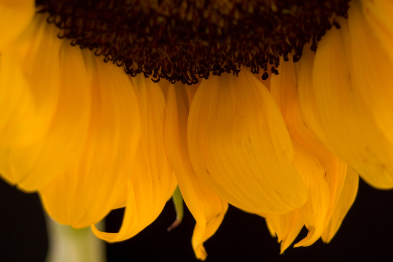 Flower051d