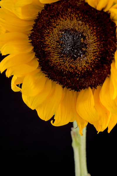 Flower051b