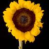 Flower051a