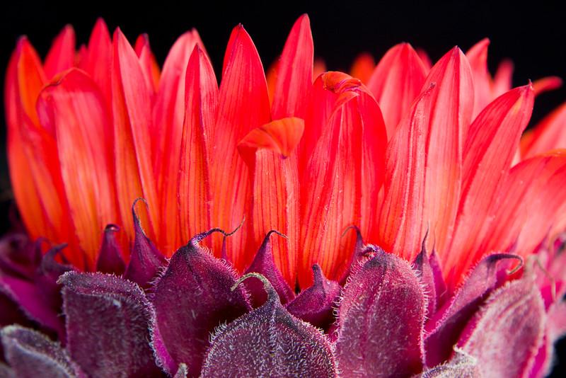 Flower071b