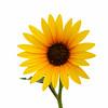 Flower 035b