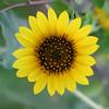 Flower 035d