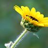 Flower 035e