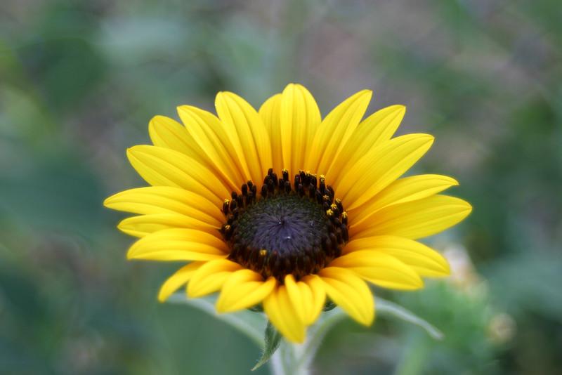 Flower 035a