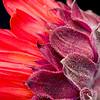 Flower071c
