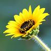 Flower 035f