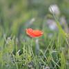 Sunflower_Apple_01112016 (2)