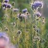 Facilea_TOS_Champs_Denens_Oct-2008__0017
