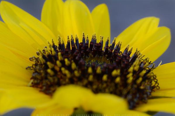 The Pollen City