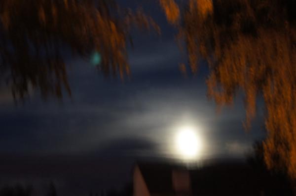 super moon night blooming cereus