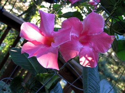 Suzi's Flowers