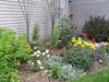 More colorful perennials and roses