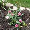 6/28/08 - Chris Poppe's garden - Kristin