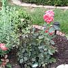 6/28/08 - Chris Poppe's garden - Gemini