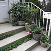 welcoming potted plants on the front step