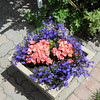 Brightly colored annuals in a pot on the patio