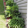 Hostas and ferns line the side of the house