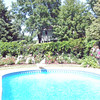 Roses poolside