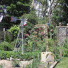Windmill and trellis in the background