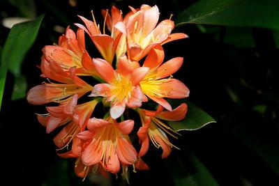 Tamborine trip incl flowers 28-1-10