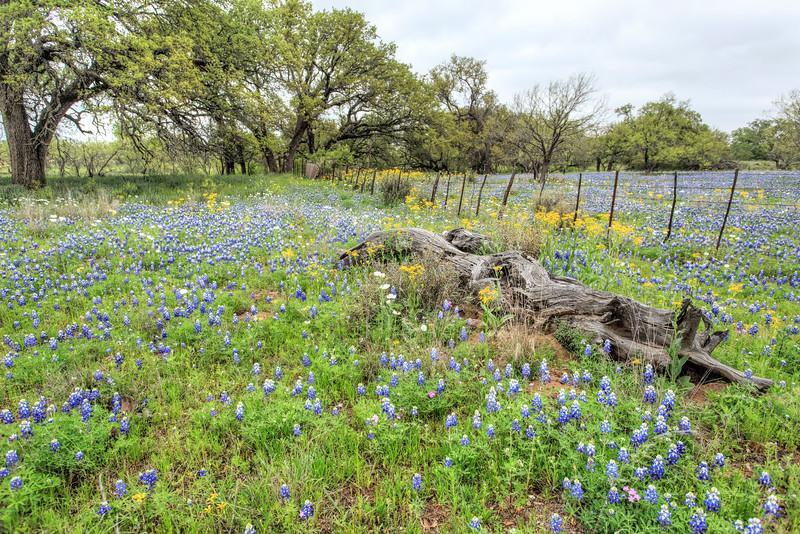 Texas Spring